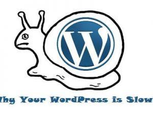 Làm gì khi WordPress chạy chậm?